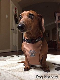 Dog Harness - No Pull Dog Harnesses for Small, Medium, and Large Dogs by PetPup - Soft, Comfortable & Adjustable Harness for Easy Walking - Lightweight & Breathable with Padded Chest - Reflective Paw Design