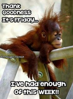 - Monkeys Funny - Friday More The post Friday appeared first on Gag Dad. Humor Friday …Friday - Monkeys Funny - Friday More The post Friday appeared first on Gag Dad. Good Morning Funny Pictures, Funny Good Morning Quotes, Good Morning Love, Good Morning Greetings, Hilarious Pictures, Cute Quotes, Funny Quotes, Funny Humor, Memes Humor