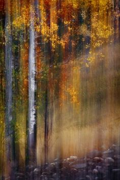 Mid-October (Composite of 3 pictures of the same group of trees, 1 sharp, 2 out of focus), Ursula Abresch Abstract Landscape, Abstract Art, Abstract Trees, Winter Schnee, Art Abstrait, Photomontage, Tree Art, Painting Inspiration, Nature Photography
