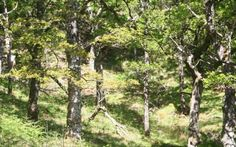 Glenborrodale Nature Trail (Ardnamurchan): A pleasant walk through deciduous woodland onto heath/moorland above on the north shore of Loch Sunart. North Shore, Walks, Woodland, Trail, Wildlife, Nature, Plants, Scotland, Naturaleza