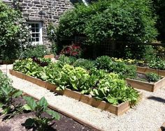 vegetable garden design with raised beds