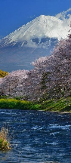 """""""Adoren al que hizo el cielo y la tierra y el mar y las fuentes de las aguas"""" (Revelación 14:7) (Cherry blossom and Mount Fuji, Japan) SB"""