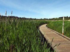 North Creek Park Boardwalk — Washington Trails Association