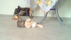 vicces macskák,macska vs nyúl video