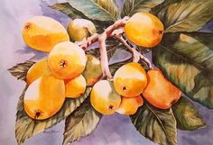Loquats Japanese Plums 11 x 15 Watercolor by watercolorsNmore, $20.00