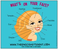 ESL, ESL vocabulary, ESL descriptions, teaching ideas, facial features Find the answers here! http://www.theenglishstudent.com/home/facial-features