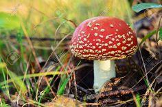 In un pezzo di ambra birmana custodisce i resti di un antico fungo I funghi sono organismi che si sviluppano sotto terra e dei quali in superficie emerge solo il corpo fruttifero che può avere le forme e i colori più vari. Il corpo fruttifero è molto delicato e molt #ambra #fungo #preistoria