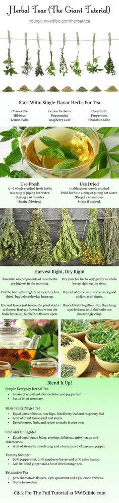 DIY Herbal Tea (From Your Own Backyard)! Full tutorial at www.nwedible.com/... …