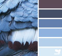 { feathered hues } image via: The post Feathered Hues appeared first on Design Seeds. Colour Pallette, Colour Schemes, Color Patterns, Color Combos, Blue Palette, Design Seeds, Color Blending, Color Mixing, Pantone
