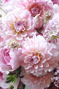 All Things Shabby and Beautiful - Pink Dahlias