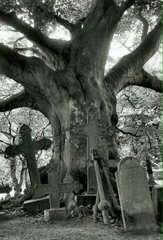 Creepy Old Tree and Graveyard Cemetery Statues, Cemetery Headstones, Old Cemeteries, Cemetery Art, Graveyards, Angel Statues, Spooky Places, Haunted Places, Abandoned Places