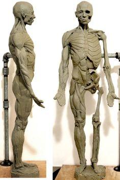 Human Anatomy For Artists, Human Anatomy Art, Body Anatomy, Anatomy Drawing, Human Figure Drawing, Figure Drawing Reference, Anatomy Reference, Human Sculpture, Sculptures Céramiques