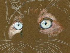 steps Karen used to create a realistic cat drawing using colored pencils on mat board.: