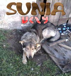Sunia Uczy
