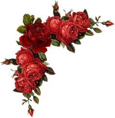 Blumenranken - Tendrils of flowers - Vrilles de fleurs Art Floral, Frame Floral, Floral Rosa, Flower Frame, Flower Art, Vintage Flowers, Red Flowers, Vintage Floral, Red Roses