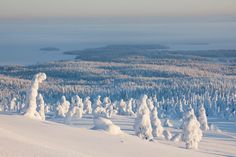 Riisitunturi National Park, near Posio, Finland-Travel to the Happiest Places in the World via Parc National, National Parks, Nature Landscape, Beau Site, Snow Covered Trees, Autumn Scenery, Winter Photos, Amazing Destinations, Beautiful Landscapes