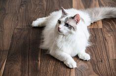 猫との暮らしを楽しむ人が増えると同時に、猫の健康や住環境に対する関心も高まっています。そこで今回ご紹介したいの…