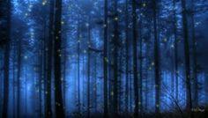 Fireflies Background - Bing images
