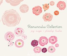 Ranunculus Collection - clip art and photoshop brushes