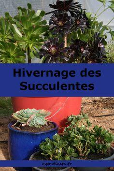 Hivernage des succulentes - comment conserver à l'abri sous tunnel ou veranda les succulentes et les plantes grasses sensible au froid