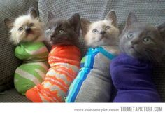 Purritos…this made me laugh harder than it should have.