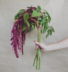 Burgundy hanging amaranthus -- perfect for winter floral arrangements