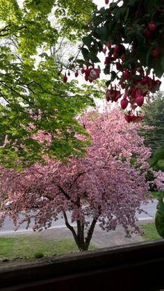 Malus prairifire pommetier prairiefire tr s r sistant aux maladies jardin autour de l 39 arbre - Mobilier de jardin resistant aux intemperies ...