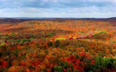 Manistee, MI National Forest - WOW!!