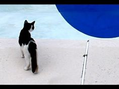 cool swimming pool illusion video (with a cat in it) ... Brought to you in part by StoneArtUSA.com ~ affordable custom pet memorials since 2001
