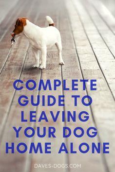 dog training,teach your dog,dog learning,dog tips,dog hacks Dog Training Techniques, Dog Training Tips, Potty Training, Dog Separation Anxiety, Dog Minding, Dog Pee, Dog Care Tips, Pet Care, Pet Tips