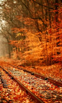 What is it about railroad tracks that draws us to think of hopes and dreams ahead of us? Brilliant orange and red fall leaves decorate the autumn woods and train tracks. Share Pictures, Fall Pictures, Pretty Pictures, Autumn Photos, Track Pictures, Paris Pictures, Autumn Day, Autumn Leaves, Autumn Forest