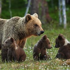 Bears family in flowers.