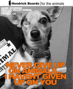 """""""Never give up on animals…I haven't given up on you""""   We will never stop fighting for animals just like this rescue named Sparrow from Valley Animal Center because animals never give up on us. Today is the day to stand up and make a difference for your local rescue animals.    www.hendrickboards.com"""