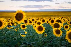 Yellow Fields by Casey McCallister on 500px