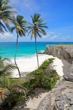 Barbados, turtle beach - so want to go here with Will, it looks so beautiful ✈️