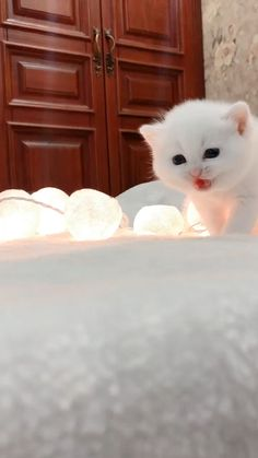7 Best Feeding Kittens images in 2019 | Feeding kittens