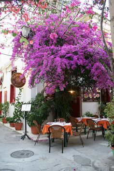 Paris Cafe and Bougainvillea Bougainvillea, The Places Youll Go, Places To See, Beautiful World, Beautiful Places, Sidewalk Cafe, Cafe Restaurant, Santorini, Places To Travel