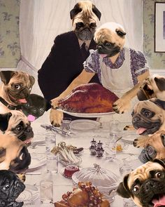 A Pug's Thanksgiving