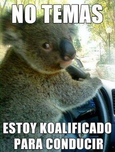 Koalificado para conducir. #humor #risa #graciosas #chistosas #divertidas