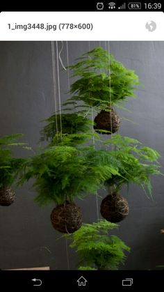Charming Hanging Plants ideas to Brighten Your Patio – Gardening Decor House Plants Hanging, House Plants Decor, Plant Decor, Hanging Ferns, Ferns Garden, Succulents Garden, Planting Flowers, Garden Art, Bonsai Plants