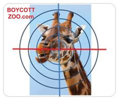 WARNING: Are you Ready To See The Truth. Faroe massacre explained. http://Boycottzoo.com/bad-news/ .