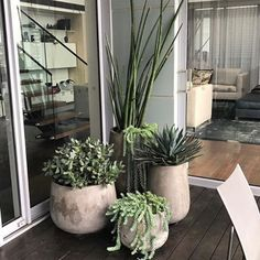 """602 Likes, 13 Comments - Exotic Nurseries (@exotic_nurseries) on Instagram: """"Incredible styling by the amazingly talented @adamrobinsondesign  #exoticnurseries #ard…"""""""