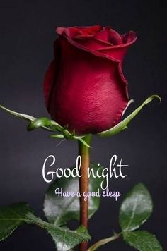 Good Night Images Wallpapers for Whatsapp Good Night Qoutes, Good Night Cards, Good Night Thoughts, Good Night Greetings, Good Night Friends, Good Night Messages, Good Night Wishes, Night Quotes, Good Evening Wishes