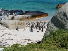 We collect you from your hotel for an half day tour of the Cape Peninsula showing you brilliant things