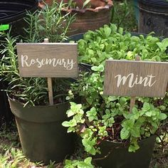 Discover recipes, home ideas, style inspiration and other ideas to try. Herb Labels, Garden Labels, Herb Markers, Plant Markers, Herb Garden In Kitchen, Herbs Garden, Vegetable Garden, Mint Herb, Garden Stand