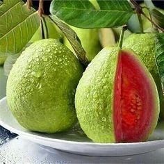 Buy Red Guava Fruit Tree Seeds Plant Fruit Psidium Guajava Grow Fan Shi Liu - All About Gardens Guava Fruit Tree, Bonsai Fruit Tree, Trees To Plant, Pink Fruit, Fruit Seeds, Tomato Seeds, Fruit Garden, Garden Seeds, Fruit And Veg