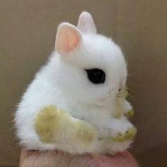 Eyeliner Bunny