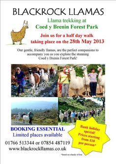 Llama trekking in Coed y Brenin.  2 miles from Cadair View Lodge accommodation  www.cadairviewlodge.co.uk