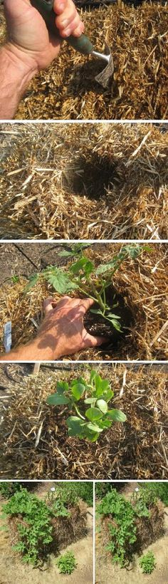 Straw Bale Gardening  gives you alot of surface to plant on   Supposed to work really really well.....  Pinaholics Chat Room Is Open  http://pinaholics.chatango.com  Pinterest Marketing  http://mkssocialmediamarketing.mkshosting.com/  More Fashion at www.thedillonmall.com  Free Pinterest E-Book Be a Master Pinner  http://pinterestperfection.gr8.com/