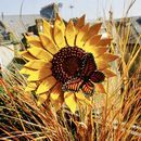 Sunflower Garden Sculpture With Orange Butterfly by London Garden Trading, the perfect gift for Explore more unique gifts in our curated marketplace. Orange Butterfly, Butterfly Flowers, Metal Flowers, Flower Art, Flower Beds, Bird Bath Garden, Lily Garden, Garden Art, Paint Recycling